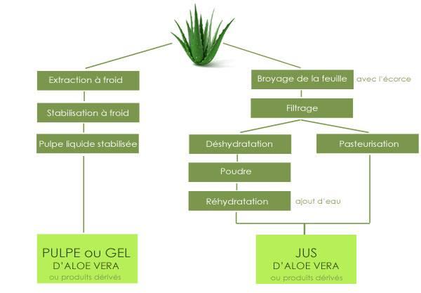 Jus ou gel aloe vera barbadensis Miller – Schéma des différentes pratiques de transformation