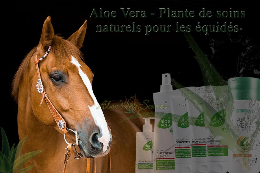 Gel Aloe vera des soins vétérinaires naturels pour les équidés (cheval - Mulet ...)