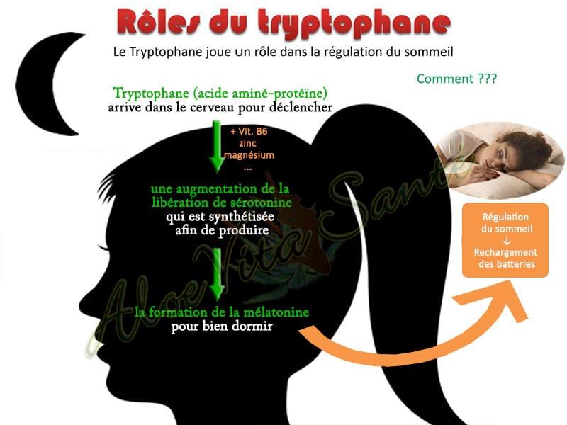 Rôles du Tryptophane, ingrédient du complément alimentaire LR Lifetakt Night Master