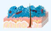Les particules de MicroSilver BG™ restent longtemps à la surface de la peau et peuvent offrir jusqu'à 12heures de protection