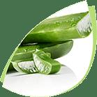 Logo plant aloe vera