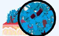 Les ions argent de MicroSilver BG™ luttent contre les bactéries et les empêchent de proliférer.